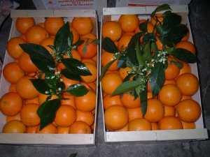 Naranjas_Enan 002